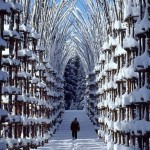 8-giuliano-mauri-artificial-winter-forest